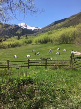 Outdoor Ed at Snowmass Falls Ranch – It truly does take a village